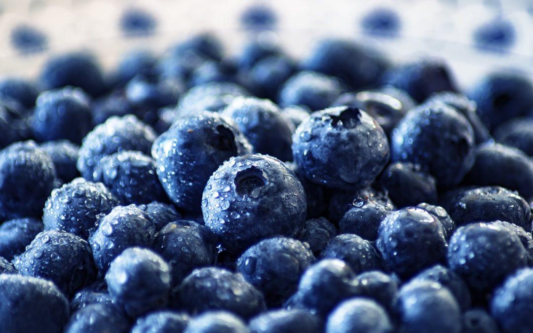 2019 Season: U-Pick Blueberry Farms in Plant City, Odessa, and More