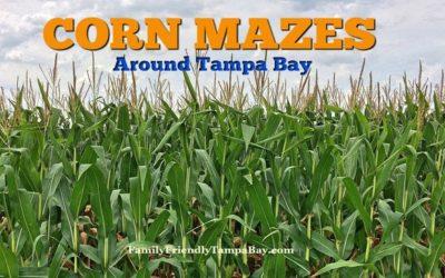Fun Fall Corn Mazes Around the Tampa Area for Families