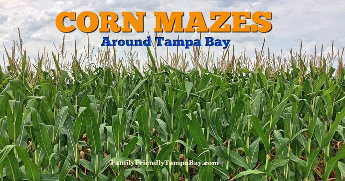 Fun Fall Corn Mazes Around the Tampa Area for Families