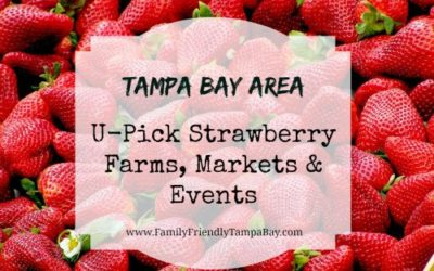 Tampa Bay Area: U-Pick Strawberry Farms, Markets and Events