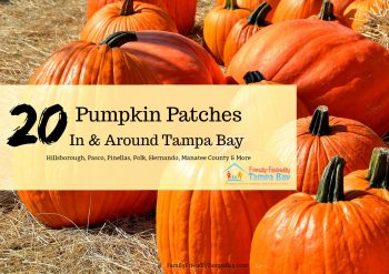 Family Guide to the Best Pumpkin Patches in and Around Tampa Bay