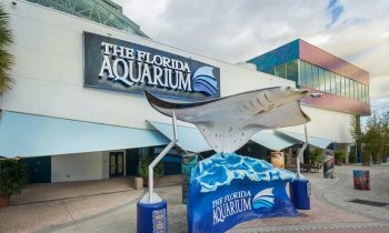 The Florida Aquarium's AquaTots Program Offers Story Time, Crafts & Play