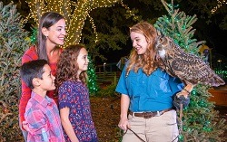 Lowry Park Zoo Christmas.Zootampa At Lowry Park Holiday Lights Family Friendly