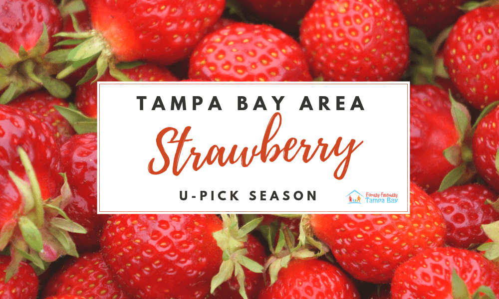 Tampa Bay Area: Organic & U-Pick Strawberry Farms, Markets and Events