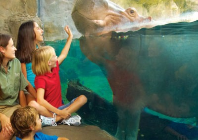 summer camps at busch gardens