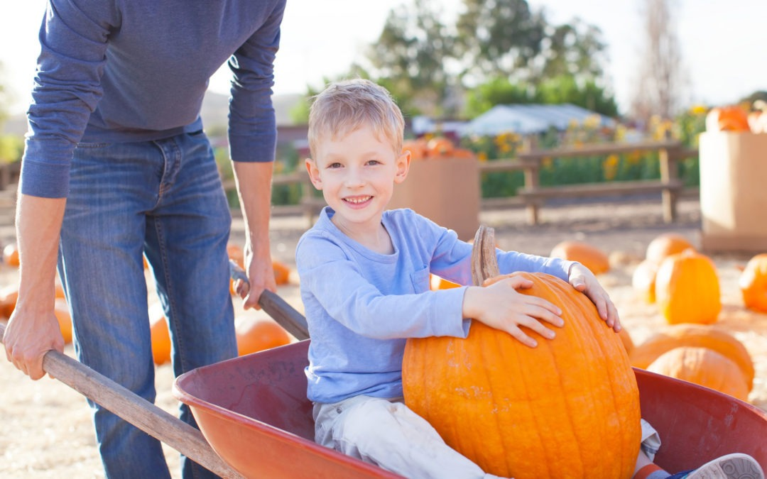 25 Fall Bucket List Ideas for Tampa Bay Families