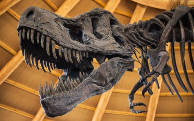 Museums for All in Florida Offers Reduced Admission