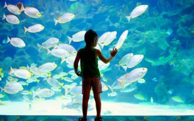 6 Reasons Why You Should NOT Get A Membership To A Museum, Zoo, or Aquarium