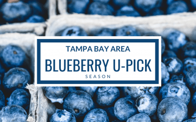 2020 Season: U-Pick Blueberry Farms in Plant City, Odessa, and More