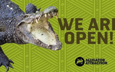 Private VIP Tours at Alligator Attraction & Wildlife Learning Center