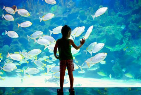 Tampa Bay Family Attractions