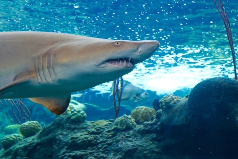 florida aquarium 768x513