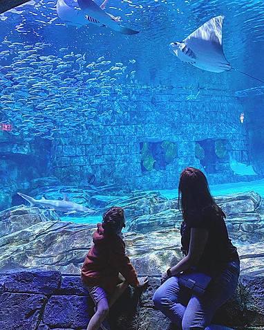 large seaworld