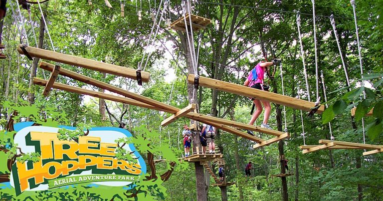 large treehopropescourse 768x403