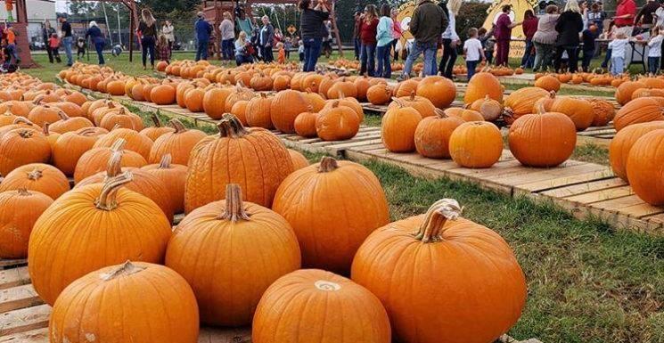 pumpkin patch wesley chapel.